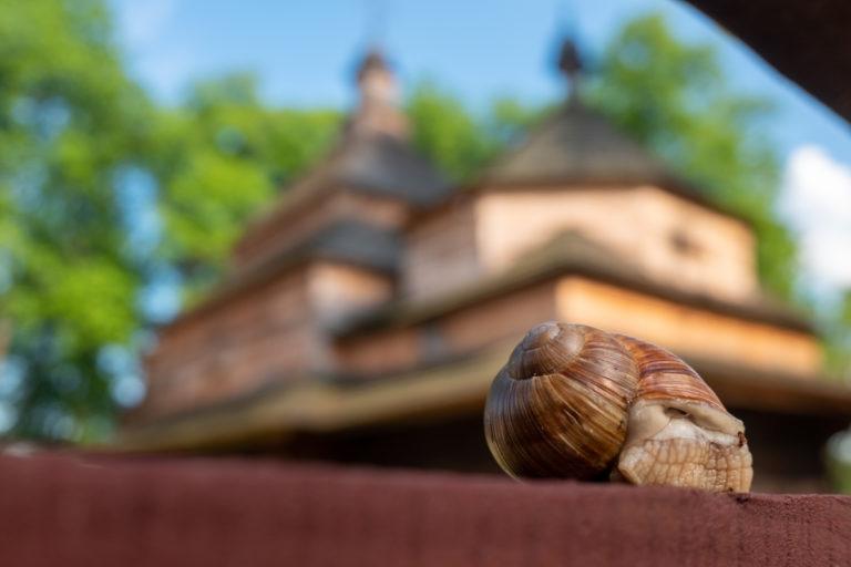 ślimak na tle cerkwii w Gorajcu